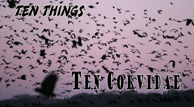 Ten Corvidae