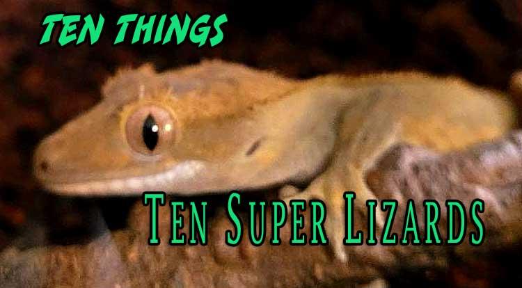 Ten Super Lizards Ten Things