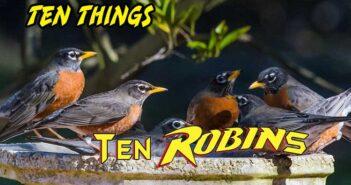 Ten Robins Ten Things